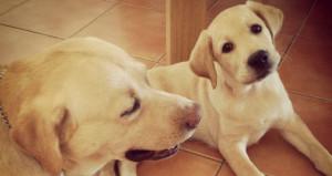 Riforma del condominio e animali domestici