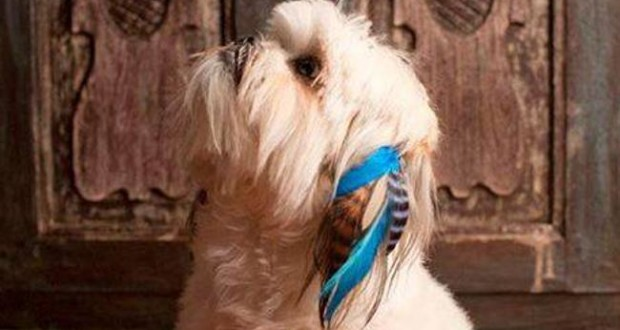 Poochie Plumes hair exstensions per i cani